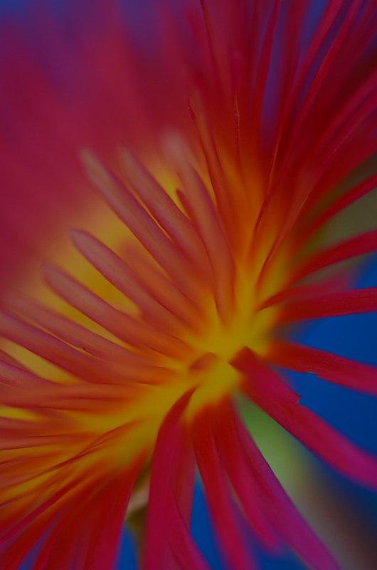 NEON FLOWERS DSC_4096 [800x600].jpg