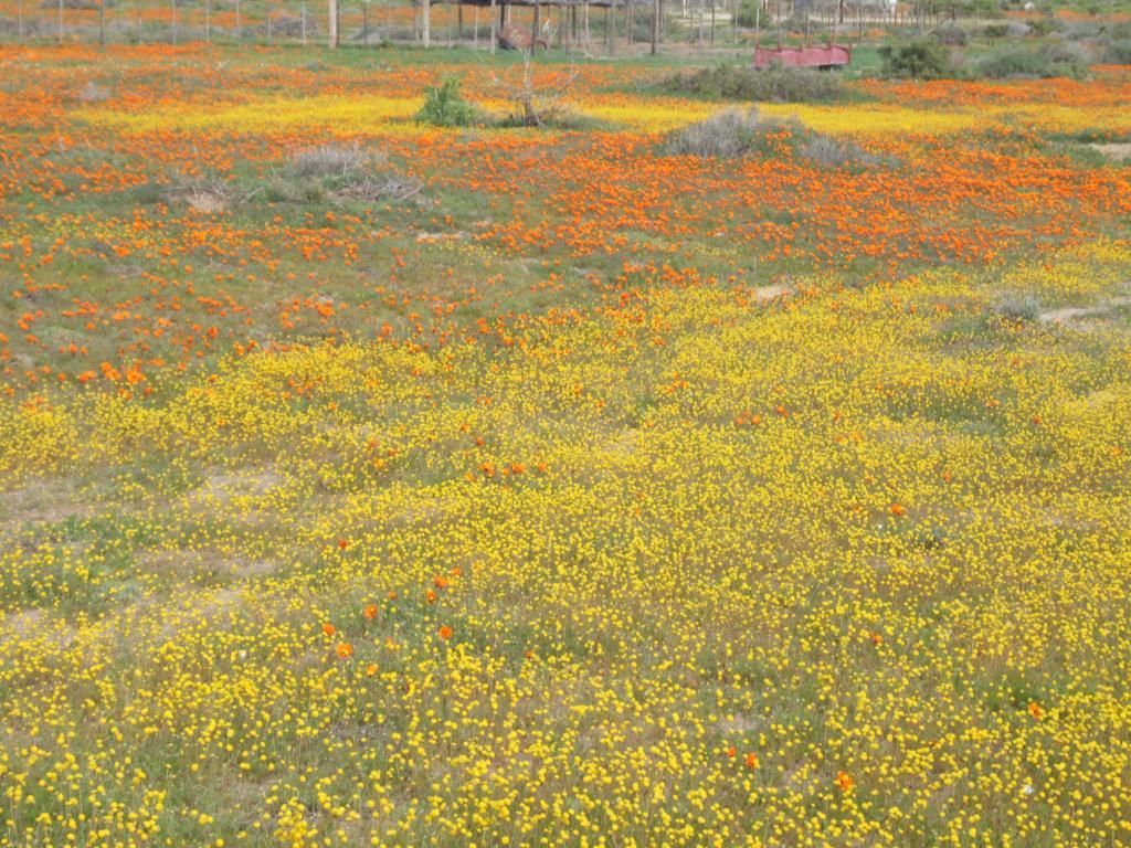 Flower report » Blog Archive » Blommeverslag